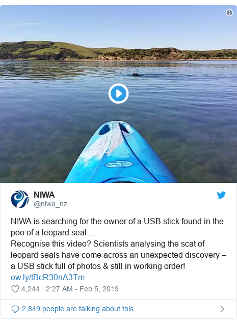 Twitter post by @niwa_nz: NIWA is searching for the owner of a USB stick found in the poo of a leopard seal… Recognise this video? Scientists analysing the scat of leopard seals have come across an unexpected discovery – a USB stick full of photos & still in working order!