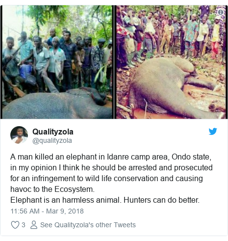 Twitter post by @qualityzola: A man killed an elephant in Idanre camp area, Ondo state, in my opinion I think he should be arrested and prosecuted for an infringement to wild life conservation and causing havoc to the Ecosystem. Elephant is an harmless animal. Hunters can do better.