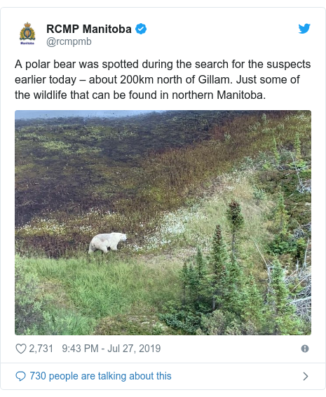Twitter post by @rcmpmb: A polar bear was spotted during the search for the suspects earlier today – about 200km north of Gillam. Just some of the wildlife that can be found in northern Manitoba.