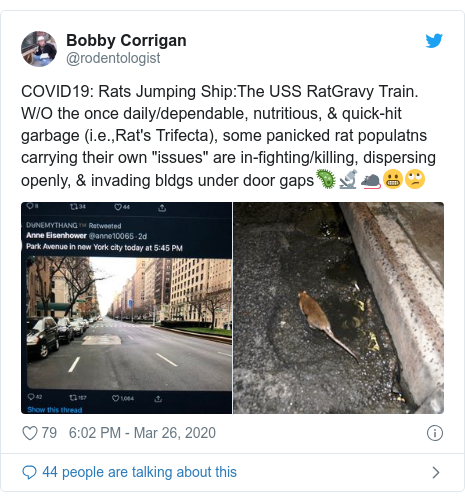 "Twitter post by @rodentologist: COVID19  Rats Jumping Ship The USS RatGravy Train. W/O the once daily/dependable, nutritious, & quick-hit garbage (i.e.,Rat's Trifecta), some panicked rat populatns carrying their own ""issues"" are in-fighting/killing, dispersing openly, & invading bldgs under door gaps🦠🔬🐀😬🙄"