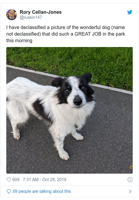 Twitter post by @ruskin147: I have declassified a picture of the wonderful dog (name not declassified) that did such a GREAT JOB in the park this morning