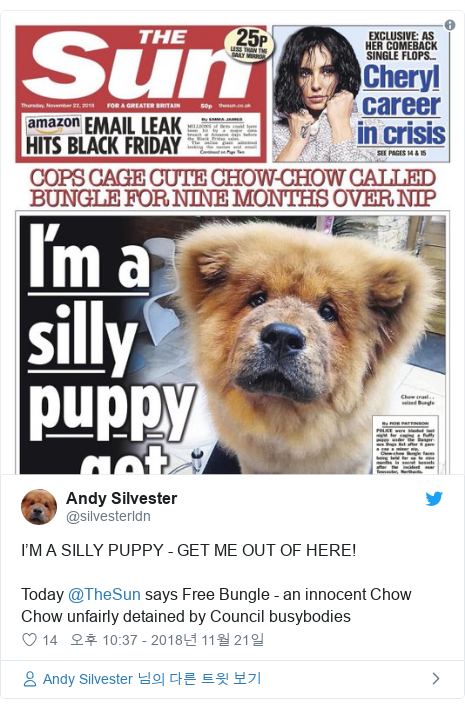 Twitter post by @silvesterldn: I'M A SILLY PUPPY - GET ME OUT OF HERE!Today @TheSun says Free Bungle - an innocent Chow Chow unfairly detained by Council busybodies