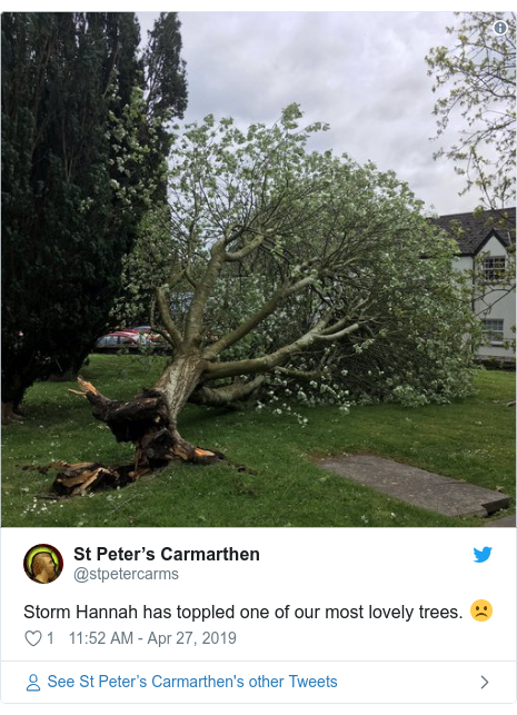 Twitter post by @stpetercarms: Storm Hannah has toppled one of our most lovely trees. ☹️