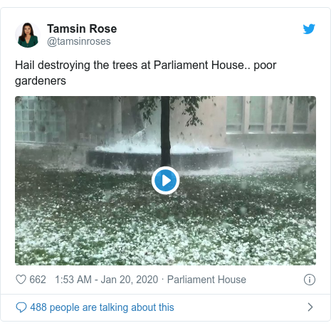 Twitter post by @tamsinroses: Hail destroying the trees at Parliament House.. poor gardeners