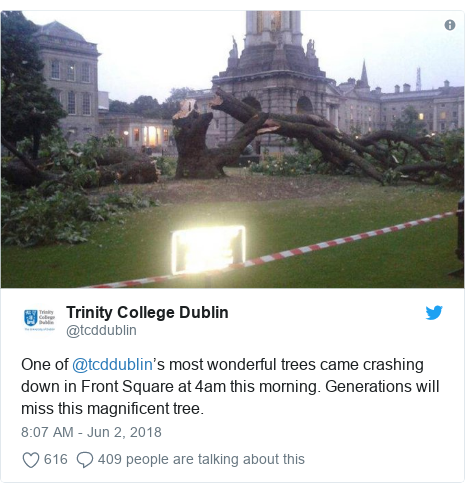 Twitter post by @tcddublin: One of @tcddublin's most wonderful trees came crashing down in Front Square at 4am this morning. Generations will miss this magnificent tree.