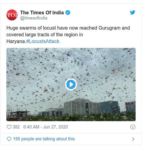 Twitter post by @timesofindia: Huge swarms of locust have now reached Gurugram and covered large tracts of the region in Haryana.#LocustsAttack