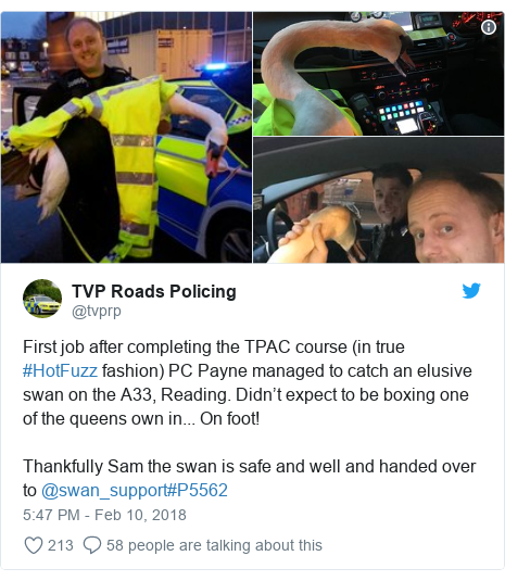 Twitter post by @tvprp: First job after completing the TPAC course (in true #HotFuzz fashion) PC Payne managed to catch an elusive swan on the A33, Reading. Didn't expect to be boxing one of the queens own in... On foot!Thankfully Sam the swan is safe and well and handed over to @swan_support#P5562