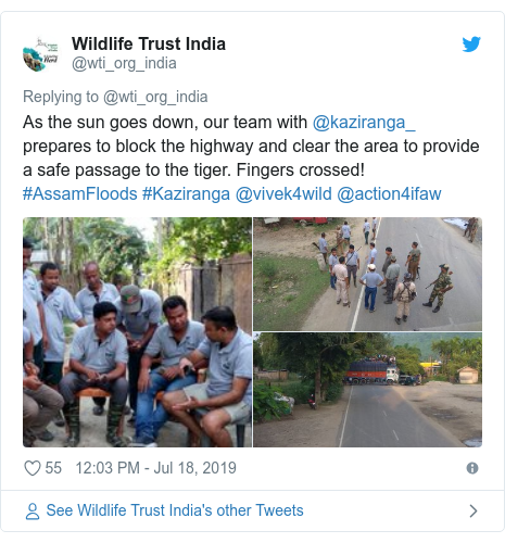 Twitter post by @wti_org_india: As the sun goes down, our team with @kaziranga_ prepares to block the highway and clear the area to provide a safe passage to the tiger. Fingers crossed! #AssamFloods #Kaziranga @vivek4wild @action4ifaw