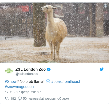 Twitter post by @zsllondonzoo: #Snow? No prob-llama! ❄️ #beastfromtheast #snowmageddon