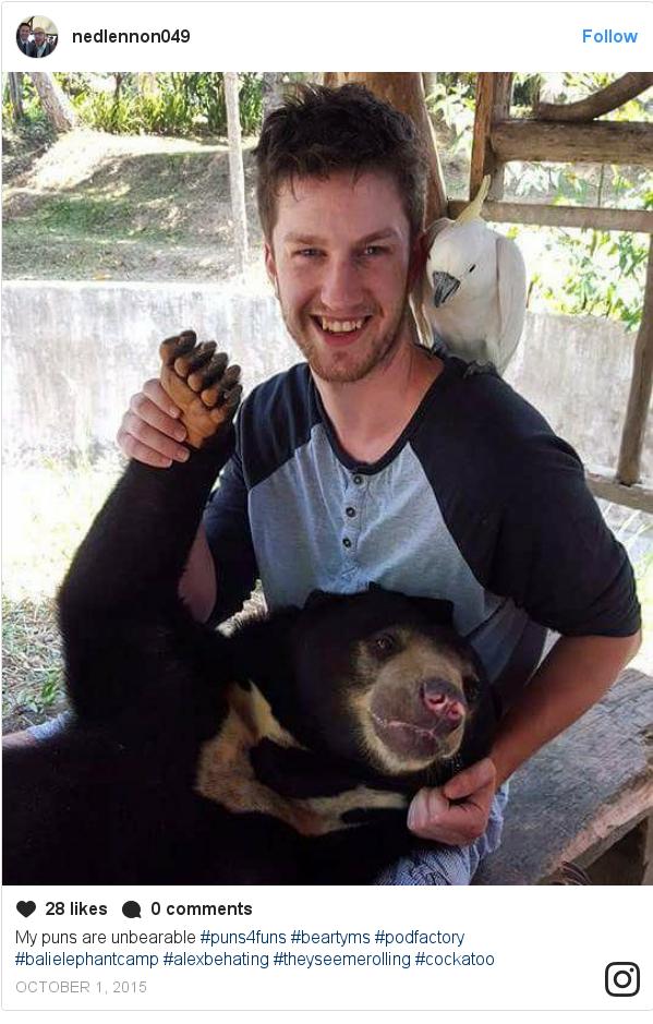 Instagram pesan oleh nedlennon049: My puns are unbearable #puns4funs #beartyms #podfactory #balielephantcamp #alexbehating #theyseemerolling #cockatoo