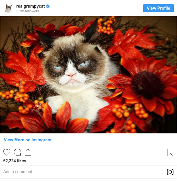 Instagram post by realgrumpycat: