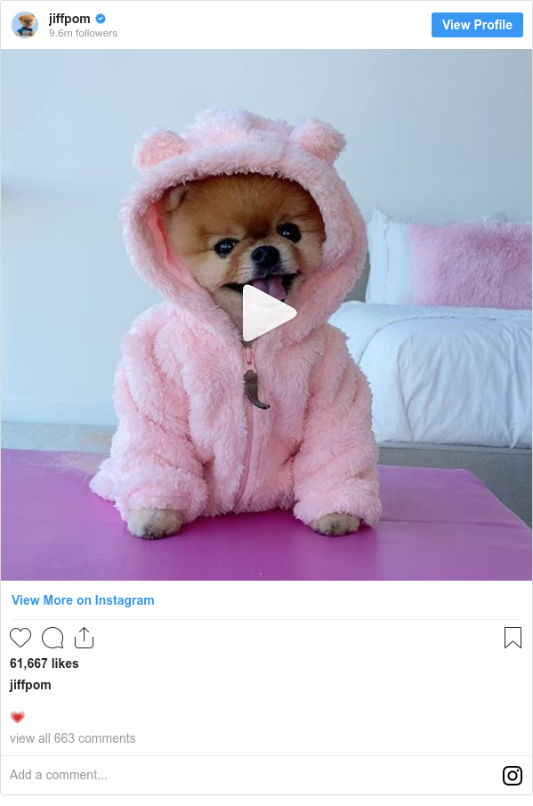 Instagram post by jiffpom: 💗