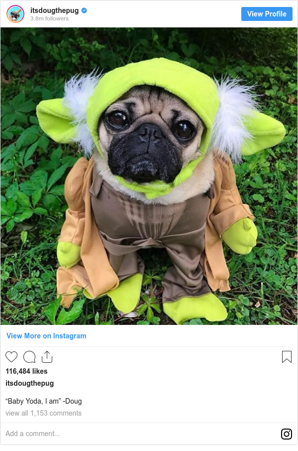 "Instagram post by itsdougthepug: ""‪Baby Yoda, I am"" -Doug"