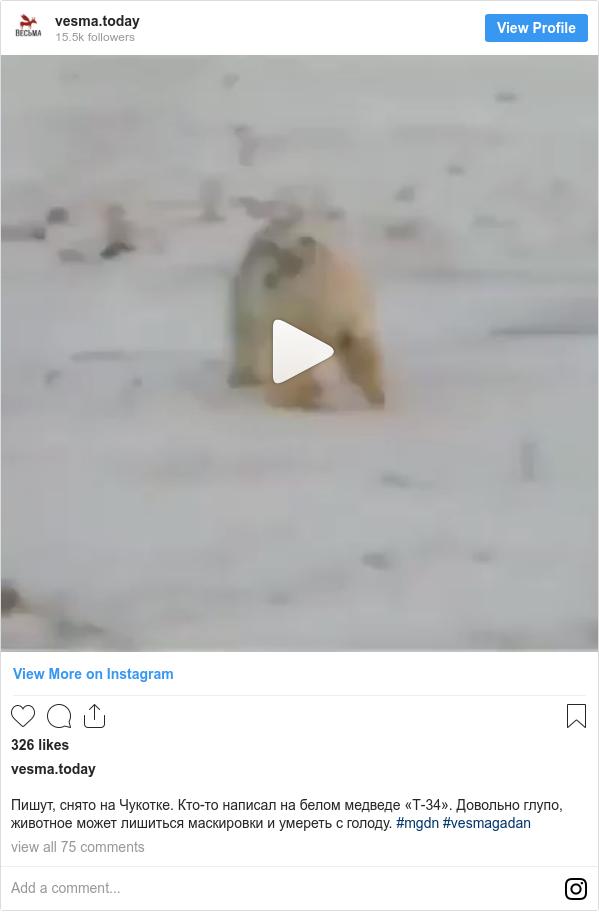 Instagram post by vesma.today: Пишут, снято на Чукотке. Кто-то написал на белом медведе «Т-34». Довольно глупо, животное может лишиться маскировки и умереть с голоду. #mgdn #vesmagadan