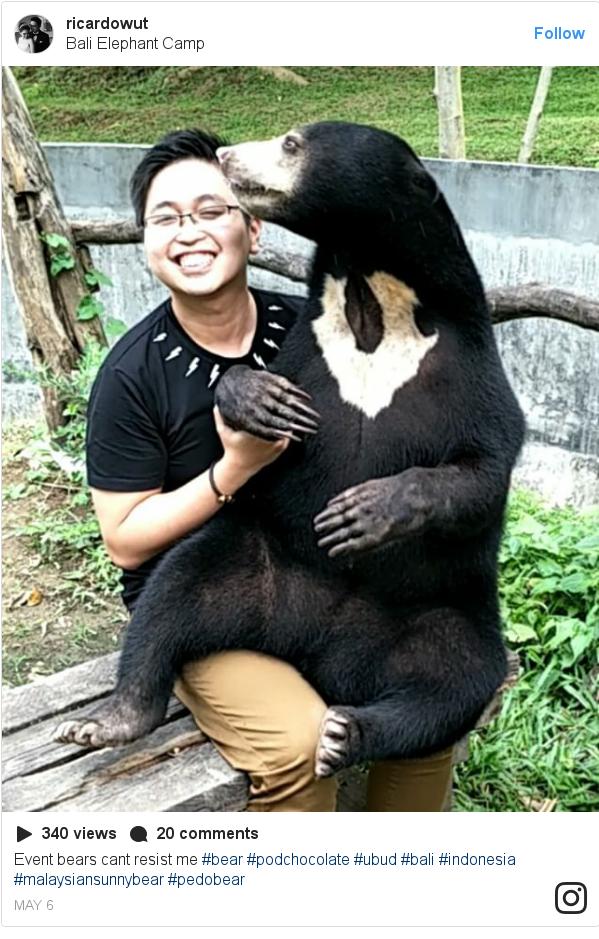 Instagram pesan oleh ricardowut: Event bears cant resist me  #bear #podchocolate #ubud #bali #indonesia #malaysiansunnybear #pedobear