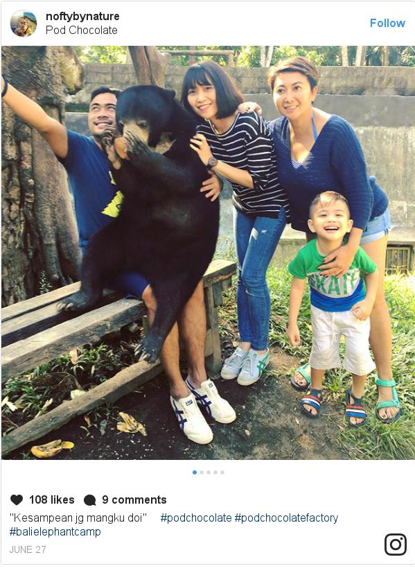 "Instagram pesan oleh noftybynature: ""Kesampean jg mangku doi"" 🐻 #podchocolate  #podchocolatefactory  #balielephantcamp"