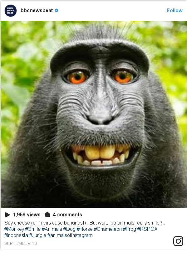 Instagram post by bbcnewsbeat: Say cheese (or in this case bananas!) . But wait...do animals really smile? . #Monkey #Smile #Animals #Dog #Horse #Chameleon #Frog #RSPCA #Indonesia #Jungle #animalsofinstagram