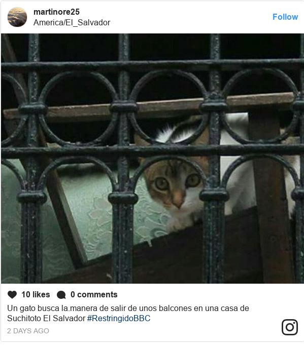 Publicación de Instagram por martinore25: Un gato busca la.manera de salir de unos balcones en una casa de Suchitoto El Salvador #RestringidoBBC