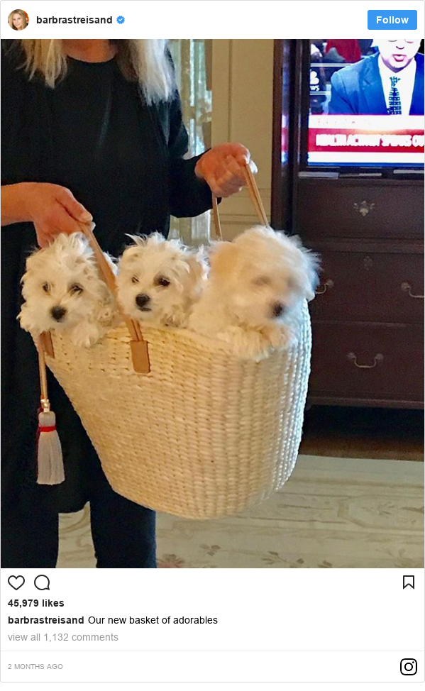 Instagram post by barbrastreisand: Our new basket of adorables