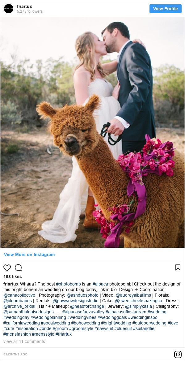 Instagram допис, автор: friartux: Whaaa? The best #photobomb is an #alpaca photobomb! Check out the design of this bright bohemian wedding on our blog today, link in bio.  Design + Coordination  @canacollective | Photography  @ashdubsphoto | Video  @audreyalbafilms | Florals  @bloombabes | Rentals  @powwowdesignstudio | Cake  @sweetcheeksbakingco | Dress  @archive_bridal | Hair + Makeup  @headforchange | Jewelry  @simplykasia | Calligraphy  @samanthalouisedesigns . . . #alpacasofanzavalley #alpacasofinstagram #wedding #weddingday #weddingplanning #weddingvibes #weddinggoals #weddinginspo #californiawedding #socalwedding #bohowedding #brightwedding #outdoorwedding #love #cute #inspiration #bride #groom #groomstyle #navysuit #bluesuit #suitandtie #mensfashion #mensstyle #friartux