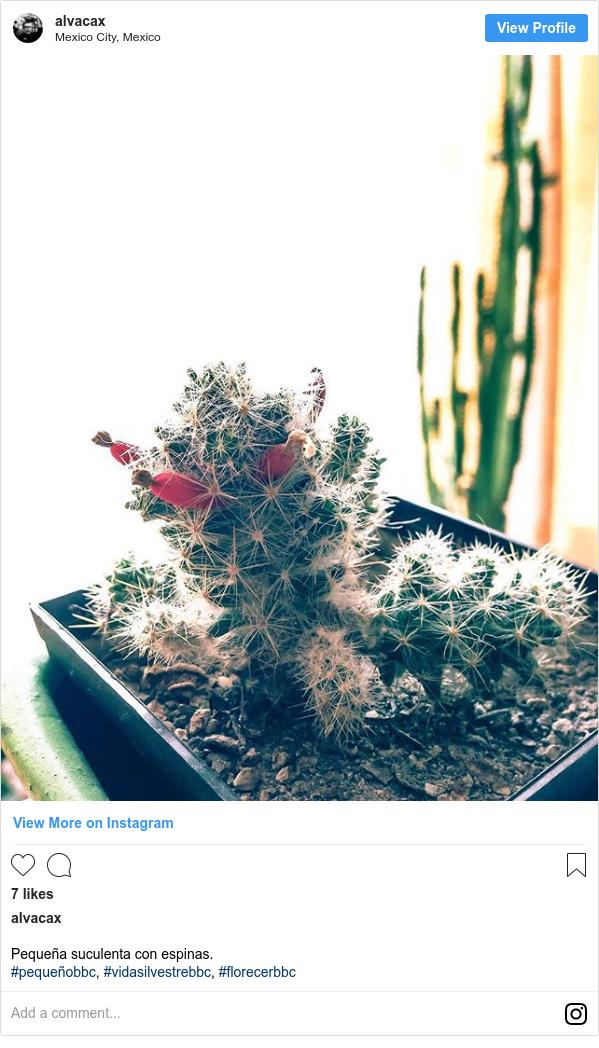 Publicación de Instagram por alvacax: Pequeña suculenta con espinas. #pequeñobbc, #vidasilvestrebbc, #florecerbbc