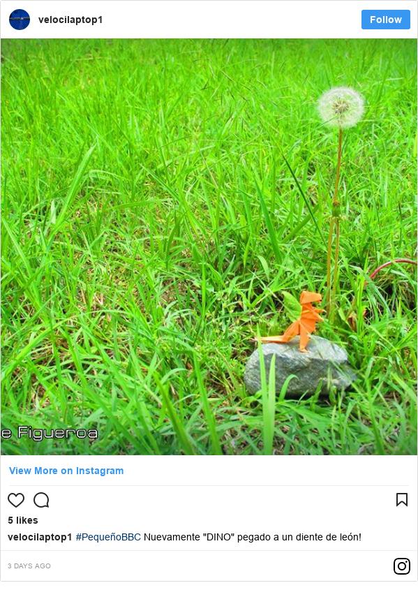 """Publicación de Instagram por velocilaptop1: #PequeñoBBC Nuevamente """"DINO"""" pegado a un diente de león!"""