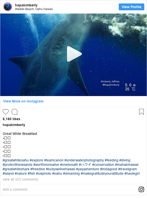 Instagram post de hapakimberly: Great White Breakfast •⠀⠀ •⠀⠀ •⠀⠀ •⠀⠀ •⠀⠀ #greatwhiteoahu #explore #teamcanon #underwaterphotography #feeding #diving #protecttheselands #worthmorealive #onebreath #ハワイ #conservation #mahalohawaii #greatwhiteshark #freedive #luckywelivehawaii #yayadventure #instagood #travelgram #island #nature #fish #uwphoto #oahu #dreaming  #makegratitudeyourattitude #haolegirl