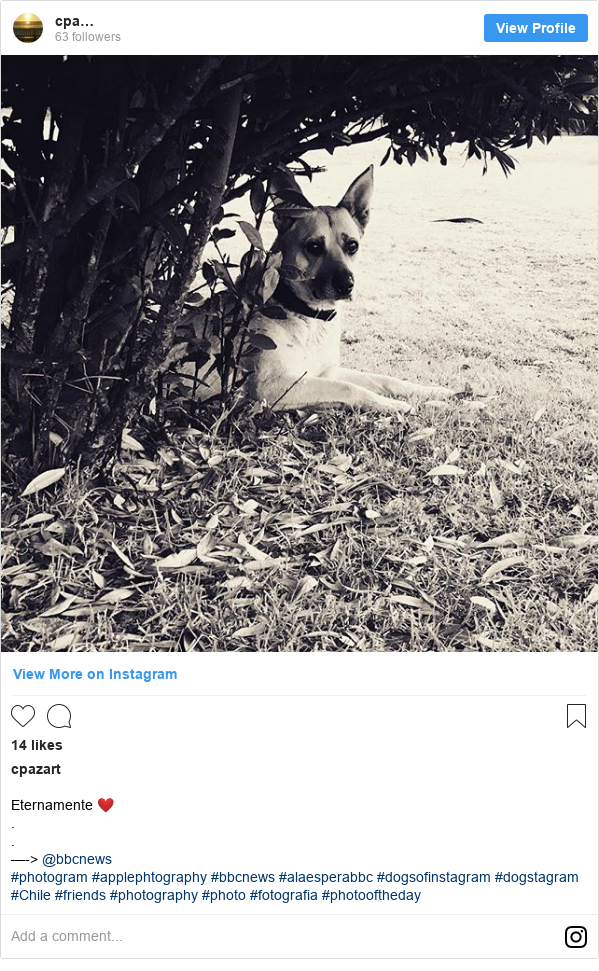 Publicación de Instagram por cpazart: Eternamente ❤️ . . —-> @bbcnews  #photogram #applephtography #bbcnews #alaesperabbc #dogsofinstagram #dogstagram #Chile #friends #photography #photo #fotografia #photooftheday