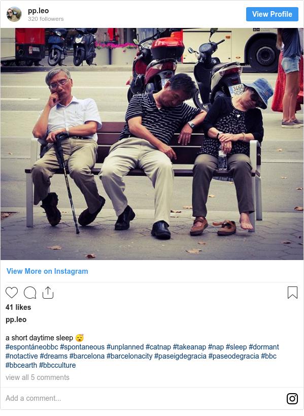 Publicación de Instagram por pp.leo: a short daytime sleep 😴  #espontáneobbc #spontaneous #unplanned #catnap #takeanap #nap #sleep #dormant #notactive #dreams #barcelona #barcelonacity #paseigdegracia #paseodegracia #bbc #bbcearth #bbcculture