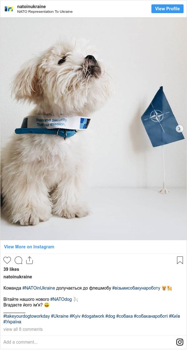 Instagram допис, автор: natoinukraine: Команда #NATOinUkraine долучається до флешмобу #візьмисобакунароботу 🐶🐕 ⠀ Вітайте нашого нового #NATOdog 🐩 ⠀ Вгадаєте його ім'я? 😀 _________ #takeyourdogtoworkday #Ukraine #Kyiv #dogatwork #dog #собака #собаканароботі #Київ #Україна