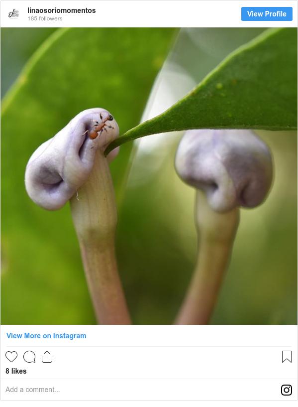 Publicación de Instagram por linaosoriomomentos: