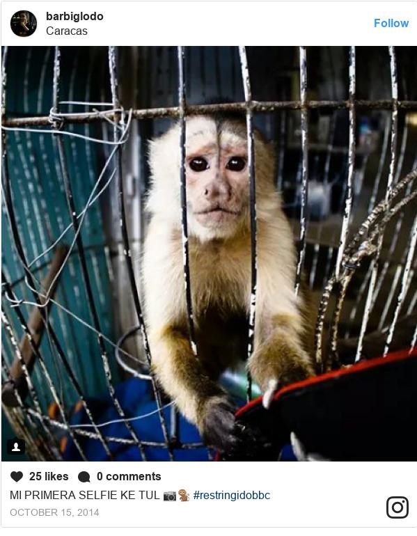 Publicación de Instagram por barbiglodo: MI PRIMERA SELFIE KE TUL 📷🐒 #restringidobbc