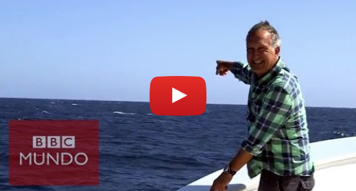 Publicación de Youtube por BBC News Mundo: Ballena azul interrumpe a un presentador de la BBC