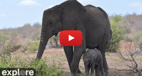 YouTube post de Explore Africa: Africam Tembe Elephant Park powered by EXPLORE.org