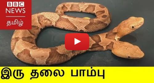 யூடியூப் இவரது பதிவு BBC News Tamil: அமெரிக்காவில் கண்டுபிடிக்கப்பட்ட அரிய வகை இருதலை பாம்பு