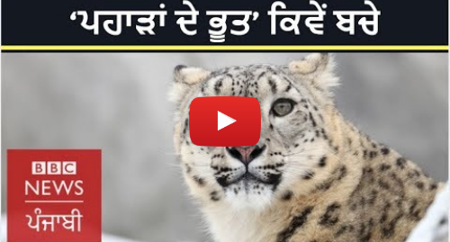 Youtube post by BBC News Punjabi: Saving snow leopard  How a small idea made big change in Russia I BBC NEWS PUNJABI