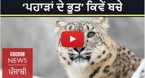 Youtube post by BBC News Punjabi: Saving snow leopard  How a small idea made big change in Russia I BBC NEWS PUNJABI