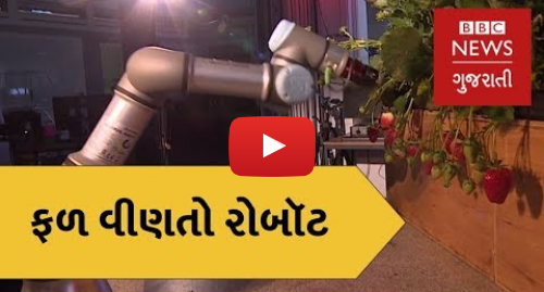 Youtube post by BBC News Gujarati: Science and Technology   Here's how Robots can pick Strawberries (BBC News Gujarati)