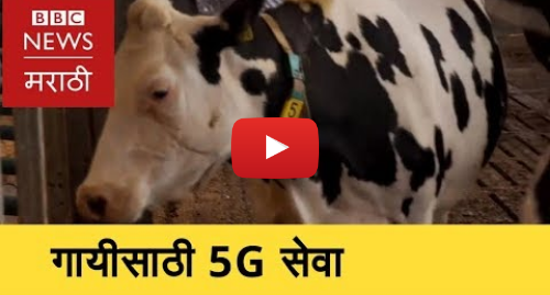 Youtube post by BBC News Marathi: 5-G Service for Healthy Cows । गायींची काळजी घेणारं 5G तंत्रज्ञान (BBC News Marathi)