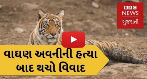 Youtube post by BBC News Gujarati: વાઘણ અવનીની હત્યા બાદ મેનકા ગાંધી અને વન મંત્રી વચ્ચે થચો વિવાદ (બીબીસી ન્યૂઝ ગુજરાતી)