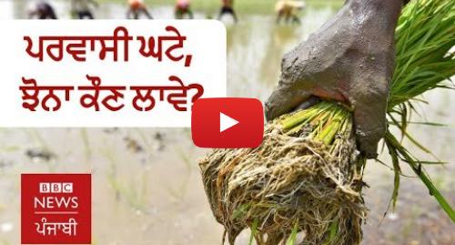Youtube post by BBC News Punjabi: ਪੰਜਾਬ 'ਚ ਪਰਵਾਸੀ ਮਜ਼ਦੂਰ ਕਿਉਂ ਨਹੀਂ ਆ ਰਹੇ, ਮਹਿੰਗੇ ਭਾਅ ਪੈ ਰਹੀ ਝੋਨੇ ਦੀ ਲਵਾਈ | BBC NEWS PUNJABI