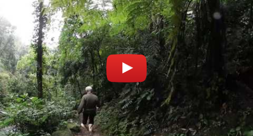 Publicación de Youtube por BBC News Mundo: VIDEO 360  Entra en la selva que creó un solo hombre con 50.000 árboles