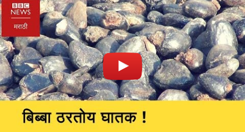 Youtube post by BBC News Marathi: How women are affected by job of deshelling of Bibba or Semecarpus Anacardium (BBC News Marathi)