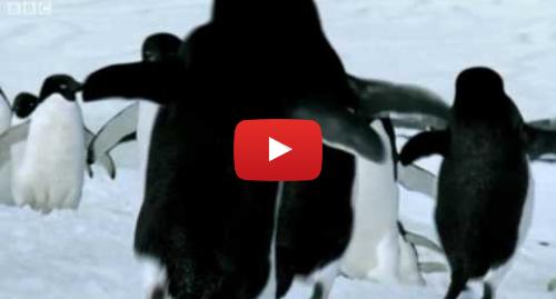 Youtube post by BBC: Flying Penguins | World Penguin Day | BBC