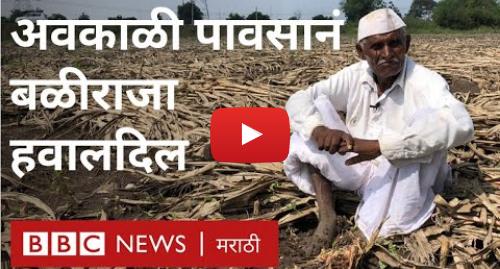 Youtube post by BBC News Marathi: ओला दुष्काळ   पावसामुळे शेतकऱ्यांच्या तोंडाचा घास हिरावला | Maharashtra Unseasonal Rain and Farmers