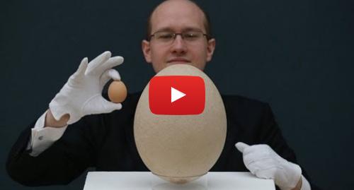 Publicación de Youtube por BBC News Mundo: Huevo gigante de ave extinta saldrá a subasta