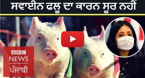 Youtube post by BBC News Punjabi: Swine Flu  What are the symptoms and how to cure | BBC NEWS PUNJABI