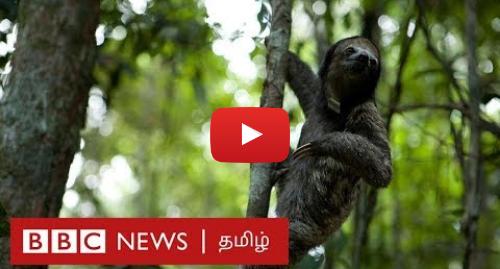 யூடியூப் இவரது பதிவு BBC News Tamil: Amazon Forest Fire  விலங்குகளுக்கு என்ன ஆனது?