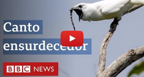 YouTube post de BBC News Brasil: Ave brasileira tem o canto mais alto de um animal já registrado