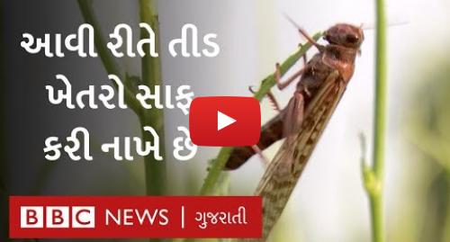 Youtube post by BBC News Gujarati: બનાસકાંઠાના ખેડૂતોની વ્યથા   તીડે ખેતરો ખાલી કરી નાખ્યાં | BBC NEWS GUJARATI
